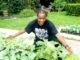 Clarence Glover Sankofa Home Gardens 1
