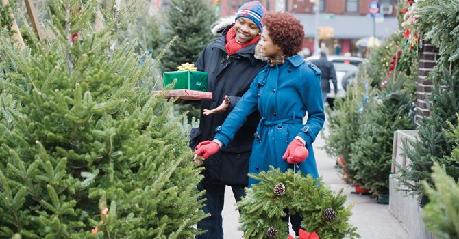 Christmas Tree Pests
