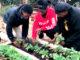 Heritage Garden of Sankofa Gardens