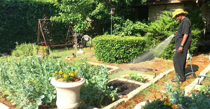 Sakofa   Freedom Gardening