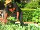 Sankofa Garden Homes