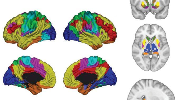 Brain antidepressants